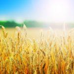 Дължат ли се социални осигуровки върху субсидиите на земеделците